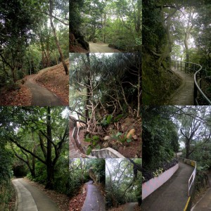 processes_soo_landscapes_0010_01_walk09